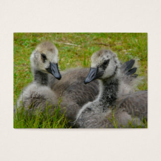 Baby Goslings - Young Canada Geese ACEO Business Card