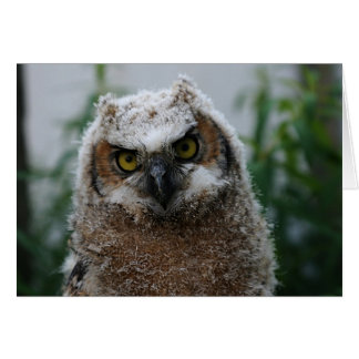 Baby Great-Horned Owl Card