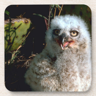 Baby Great Horned Owl Coaster