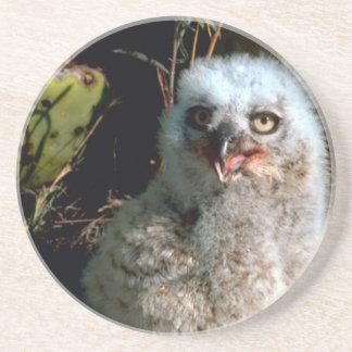 Baby Great Horned Owl Sandstone Coaster