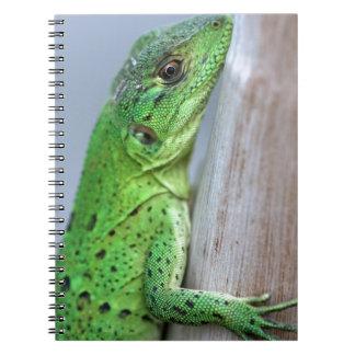 Baby green iguana notebook