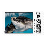 Baby Green Sea Turtle Postage Stamp
