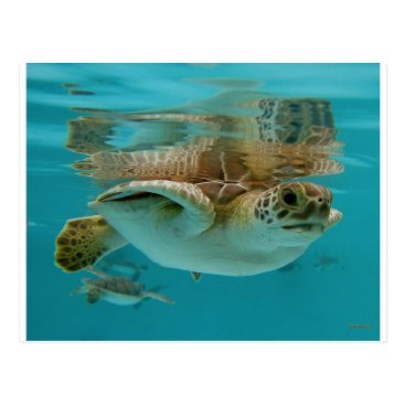 Toddler & Baby themed Baby Green Sea Turtle Postcard