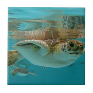 Baby Green Sea Turtle Small Square Tile