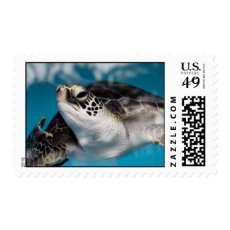Baby Green Sea Turtle Stamp