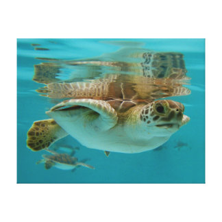 Baby Green Sea Turtle swimming Canvas Print