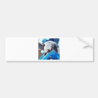 Baby Green Turtle Bumper Sticker