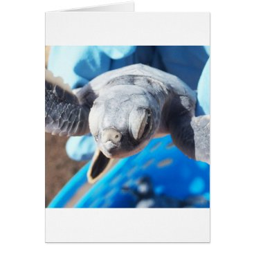 Beach Themed Baby Green Turtle Card