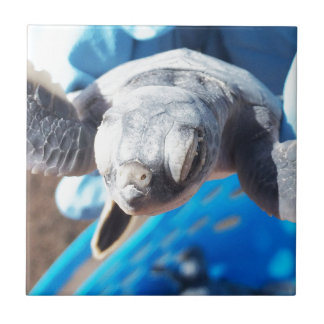 Baby Green Turtle Ceramic Tile