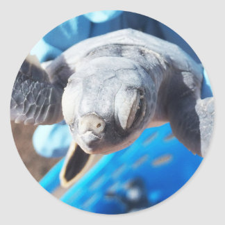 Baby Green Turtle Classic Round Sticker