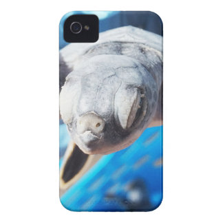Baby Green Turtle iPhone 4 Case-Mate Case