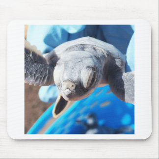 Baby Green Turtle Mouse Pad