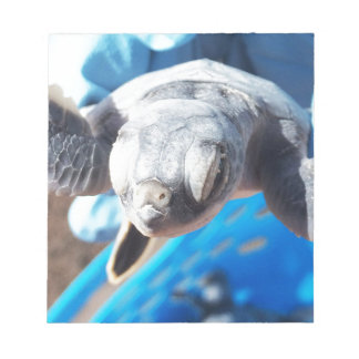 Baby Green Turtle Notepad