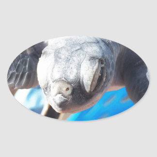 Baby Green Turtle Oval Sticker