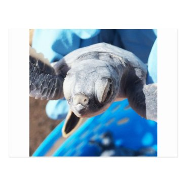 Beach Themed Baby Green Turtle Postcard