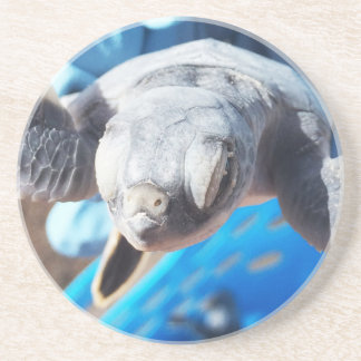 Baby Green Turtle Sandstone Coaster