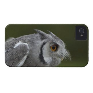 Baby Grey Owl Case-Mate iPhone 4 Case