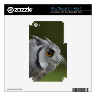 Baby Grey Owl Decals For iPod Touch 4G