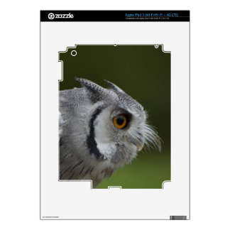 Baby Grey Owl iPad 3 Decal