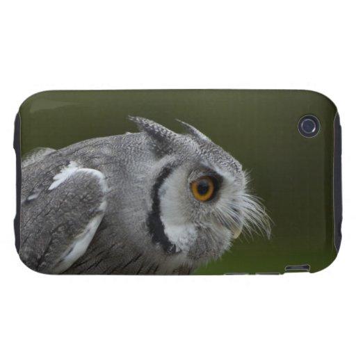 Baby Grey Owl iPhone 3 Tough Case