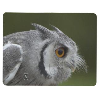 Baby Grey Owl Journal