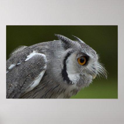 Baby Grey Owl Print