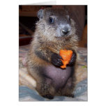 Baby Groundhog Maude Note Card