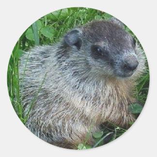 Baby Groundhog Sticker