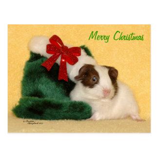 Baby Guinea Pig Merry Christmas Postcard