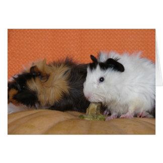 Baby Guinea Pigs on Pumpkin Card