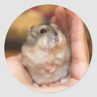 Baby hamster (sticker) classic round sticker