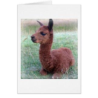 Baby Hannah Alpaca Card