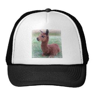 Baby Hannah Alpaca Trucker Hat