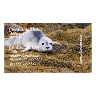 Baby Harbor Seal Business Cards