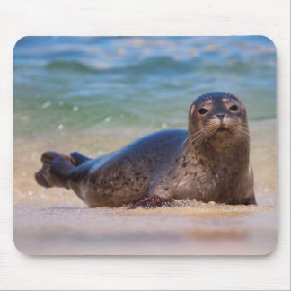 Baby Harbor Seal in Water Mouse Pad