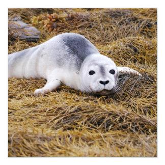 Baby Harbor Seal Invitations