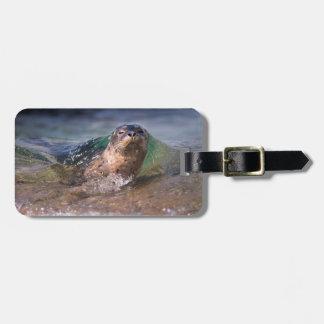 Baby Harbor Seal Luggage Tag