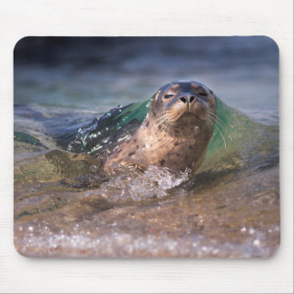 Baby Harbor Seal Mouse Pad