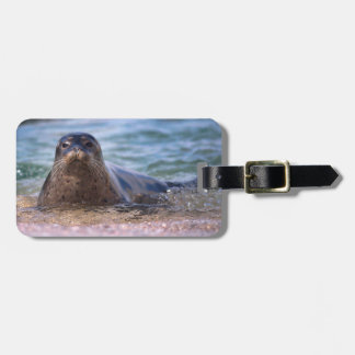 Baby Harbor Seal on the Beach Bag Tag