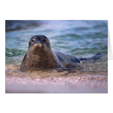 Beach Themed Baby Harbor Seal on the Beach Card