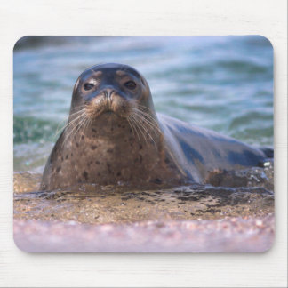 Baby Harbor Seal on the Beach Mouse Pad