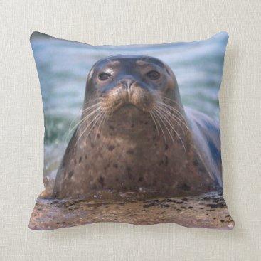 Beach Themed Baby Harbor Seal on the Beach Throw Pillow