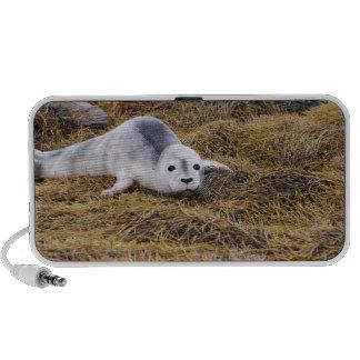 Baby Harbor Seal Portable Speakers