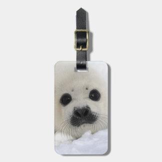 Baby Harp Seal Bag Tag