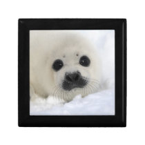 Baby Harp Seal Jewelry Box