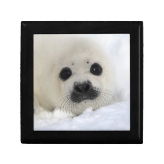 Baby Harp Seal Jewelry Box