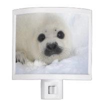 Baby Harp Seal Night Light