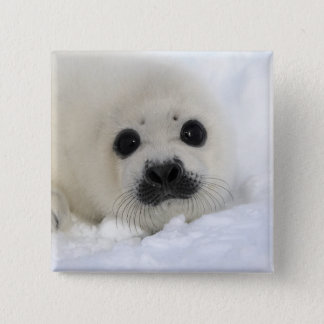 Baby Harp Seal Pinback Button