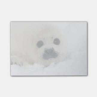 Baby Harp Seal Post-it® Notes