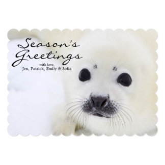 Baby harp seal pup on ice of the White Sea Card